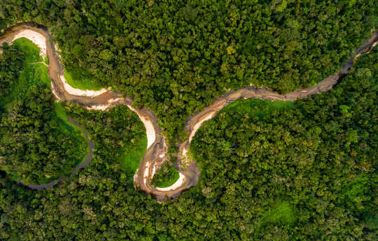 What Would Happen If We Cut Down The Amazon Rainforest?